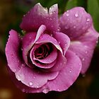 Hickford Rose by sedge808
