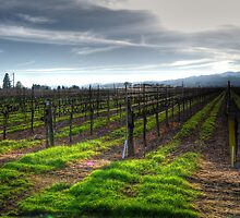 January Vineyard by Rachael Towne