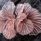 NATURE&#x27;S JEWELRY - SHELF FUNGUS GILLS by May Lattanzio