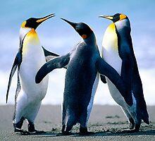 Penguin by johnsam