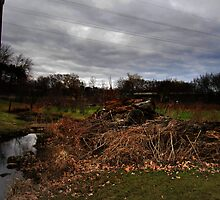 Lumber Rotting By Creek - Chelmsford Massachusetts by Dylan Thompson