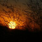 Free State Sunset (2) {Views: 2518} Petrusburg, South-Africa  by Qnita