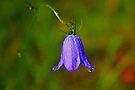 Bluebell Morning Dew by Jo Nijenhuis