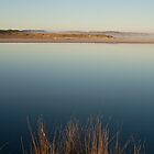 Reeds  -  Wilson Inlet by pennyswork