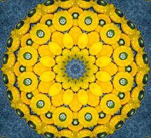 Golden Button Squash Quadrium Flower by Hugh Fathers