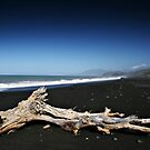 Driftwood by Paul McSherry