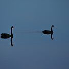 Black Swans by Paul McSherry