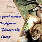 African Art & Photography Group Banner by Sassie Otto