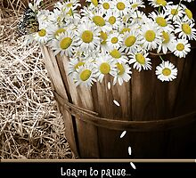 Learn To Pause by Maria Dryfhout