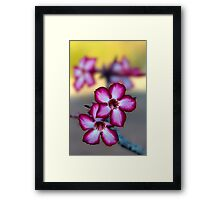 Colour Of Life XXXIX (Impala Lily) Framed Print