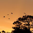 White Ibis Sunrise by Joe Jennelle