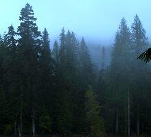 Twilight Woods - Mount Rainier by A-N-E