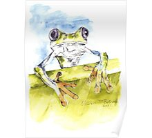 African Tree Frog Poster