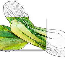 Bok Choy by Terry Marter