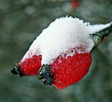 Icecold berries.... by Yool