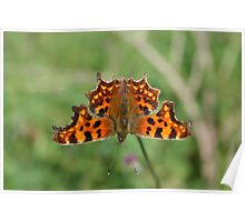 Butterfly at butterfly tarn Poster