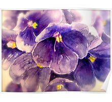 Violets... Poster