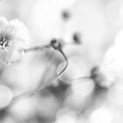 Baby's Breath by withacanon