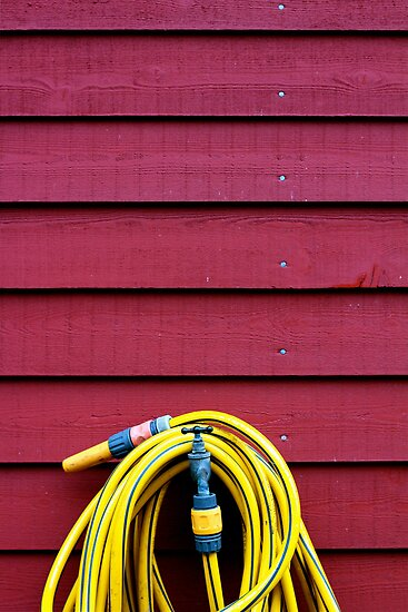 Lonely hose by Caitlin Wynne