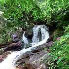 Falls Branch Waterfall by Annlynn Ward