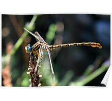 Dragonflies on a farm. Poster