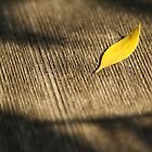 Yellow leaf by pulen
