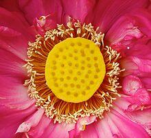 Water Lily 11 by Kathryn Potempski