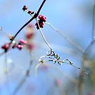 Red Berries at Ijams Nature Center by Shayna Sharp