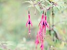 Wayside flowers; Traveler's dower. by the-novice