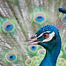 Peacock With Pizzazz by Joe Jennelle