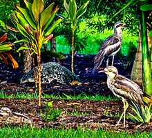 Curlew Family - Etty Bay NQ by Giovanna Devlin