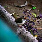 Bird in the Park by stilledmoment