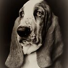 The Bassett Hound by Rory Garforth