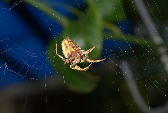 Weaving a web by Kerry  Hill