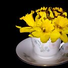 Daffodil Tea by Lynne Morris