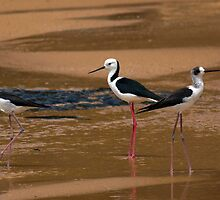 Birds at Turrimetta beach by Doug Cliff