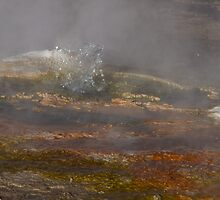 Bubbling geyser of El Tatio, Atacama Desert, Chile by Coreena Vieth
