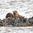 Otters, Mull, Scotland by Tim Collier