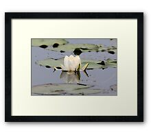 Water Lilly Reflection Framed Print