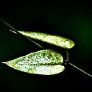 Heart of green... by Kornrawiee