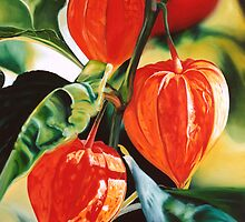 """Chinese Lanterns"" - cape gooseberry by James  Knowles"
