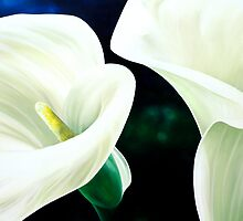 """Mercy and Majesty"" - huge painting of calla lilies by James  Knowles"