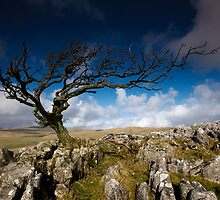 Windswept by Andrew Leighton