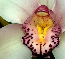 February Orchid  by Dennis Rubin IPA