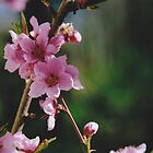 Peach Blossoms #2 by Edward A. Lentz