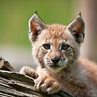 Lynx Kit by J. Day