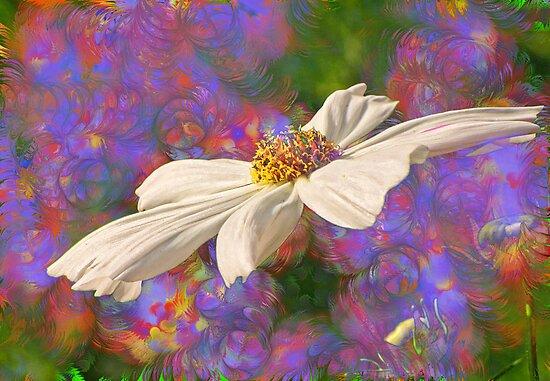 Spring Fever by Pamela Phelps