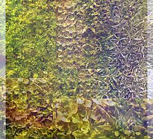 Sedum Wall Abstract by Betty Mackey