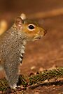 Grey Squirrel by Neil Bygrave (NATURELENS)