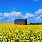 Prairie Colours by Photo-Bob